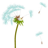 Dandelion on the wind Stock Image