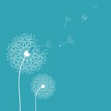 Dandelion in the wind background. Vector design Royalty Free Stock Photos