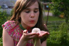 Dandelion wish Stock Images