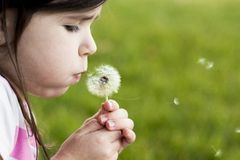 Dandelion Wish Royalty Free Stock Image