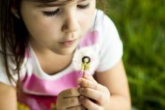 Dandelion Wish Royalty Free Stock Images