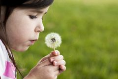Dandelion Wish Royalty Free Stock Images