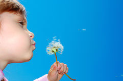 Dandelion wishing blowing seeds Royalty Free Stock Photos