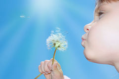 Dandelion wishing blowing seeds. Child blowing away dandelion seeds in the blue sky Royalty Free Stock Photography