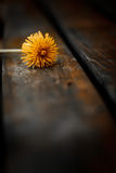 Dandelion on wood background. Royalty Free Stock Photos