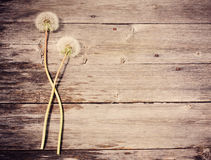 Dandelion  on wooden background Royalty Free Stock Image