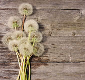 Dandelion on a  wooden background Royalty Free Stock Image