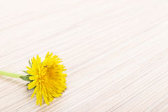 Dandelion on wooden ground Royalty Free Stock Image