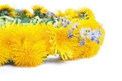 Dandelion wreath on a white Royalty Free Stock Photo