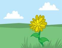 Dandelion Yellow Stock Photos