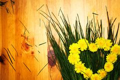 Yellow flowers of dandelions in the form of a heart on the green grass stock images