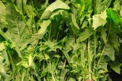 Dandelion zielenie jak widzieć na odkładającym w sklepie Fotografia Stock