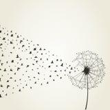 dandelion9 иллюстрация штока