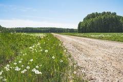 Dandelions żwiru drogowy prowadzić las obrazy stock
