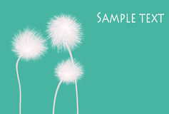Dandelions. Stylish dandelions on green background text card Royalty Free Stock Photography