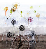 Dandelions. Abstract painting with many dandelions Stock Image