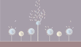 Dandelions. Vector illustration, Dandelions on a meadow Stock Images