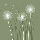 Dandelions. Abstract background with dandelions - 2d Stock Photo