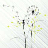 Dandelions. Abstract background with dandelions - 2d Royalty Free Stock Images