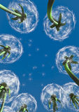 Dandelions. CG dandelions with seeds against blue sky royalty free illustration