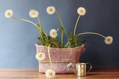 dandelions Immagine Stock Libera da Diritti