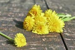 dandelions Fotos de Stock