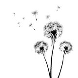 Dandelions vector illustration