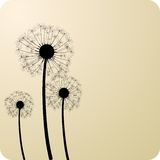 Dandelions. Royalty Free Stock Images