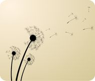 dandelions Obrazy Royalty Free