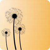 Dandelions. Royalty Free Stock Photo
