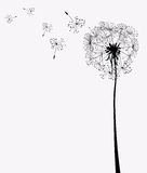 Dandelions. In wind on light background Royalty Free Stock Images
