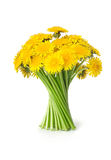 Dandelions. Bunch of dandelions on white background Stock Photo