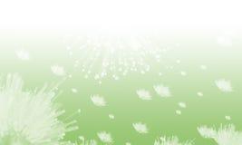 dandelions Obraz Stock