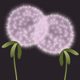 dandelions abstrakcjonistyczne rośliny Zdjęcia Stock