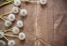 Dandelions on aged wooden background Royalty Free Stock Photos