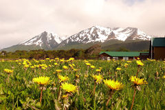 Free Dandelions And Mountains Royalty Free Stock Image - 5173506