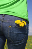 Dandelions in back pocket Stock Photos