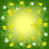 Dandelions background Royalty Free Stock Image