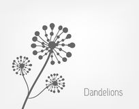 Dandelions background. Three dandelions. Black and white. Vector illustration Stock Images