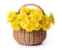 Dandelions in a basket. Isolated over white Royalty Free Stock Image