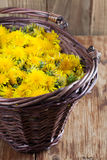 Dandelions in a basket Stock Photos
