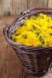 Dandelions in a basket Stock Image