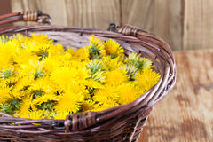 Dandelions in a basket Stock Image