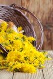 Dandelions in a basket Stock Photo