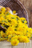 Dandelions in a basket Royalty Free Stock Photography