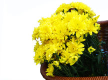 Dandelions in a basket. Isolated over white Stock Images