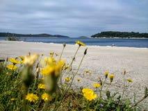 Dandelions blisko morza Obraz Royalty Free