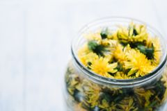 Dandelions blooming in a glass jar on a white background