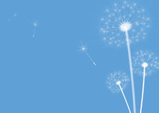 Dandelions blue. White dandelions on a blue background. Vector Stock Images