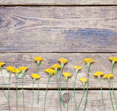 Dandelions on the boards.simple rustic Royalty Free Stock Image